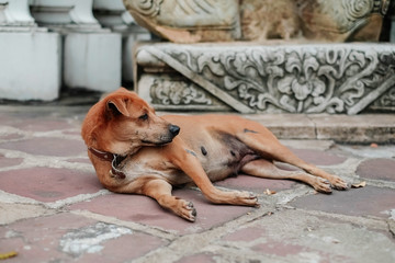 The dog on the street of Thailand