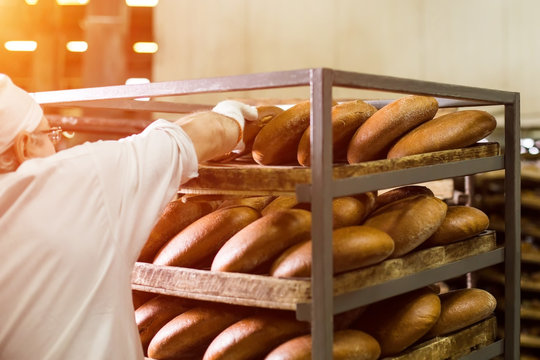 Brown bread on wooden rack. Worker touching bread on rack. Careful work of factory employee. Respect the fruits of labor.