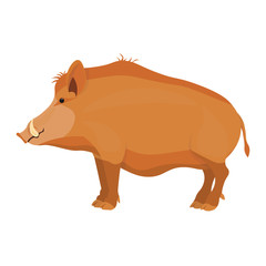Wild boar vector illustration isolated on white background