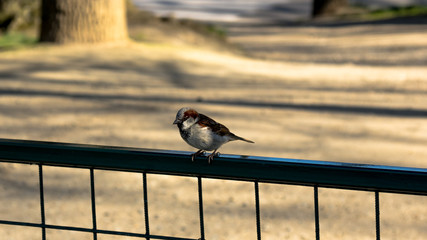 Small bird sitting on the fence