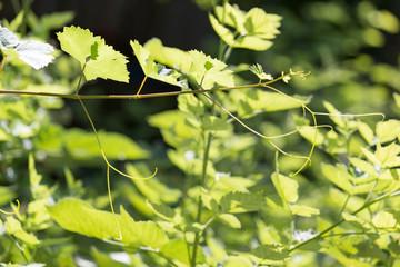 beautiful green leaf in nature