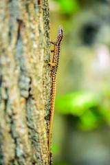 Lizard on a tree bark