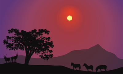 Silhouette of zebra and antelope