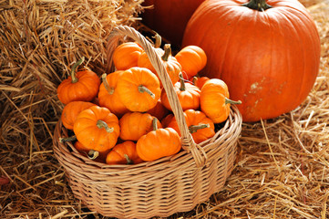 pumpkin in basket and on the hay, autumn decoration for thanksgiving