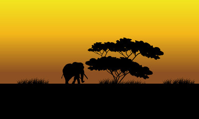 One elephant silhouette in the fields