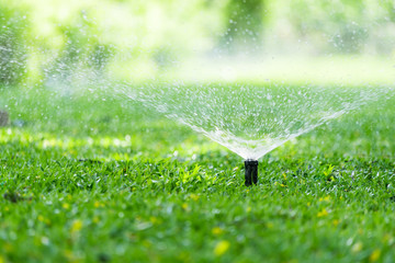 Garden Sprinkler Watering Grass. Automatic Sprinklers, Lawn Sprinkler in Action, Background Concept.