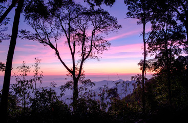 Scenic forest sunrise blue purple scene at national park morning time