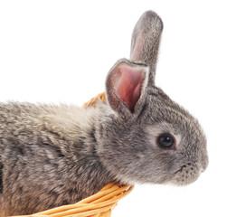 Little bunny in a basket.