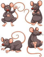 Mouse with gray fur in four actions