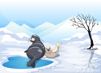 Two seals sitting on ice