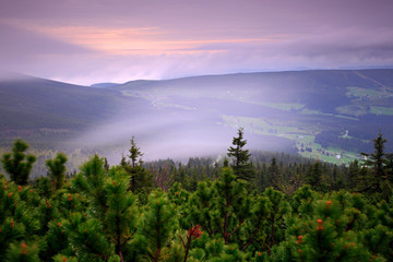 Printed kitchen splashbacks Purple Krkonose mountain, forest in the wind, misty landscape, with fog and clouds, mountain pine, Czech Republic, central Europe