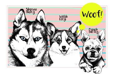 Vector set of domestic dog portraits. Siberian husky, welsh corgi pembroke, french bulldog faces. Hnd drawn dog illustration. Funny puppy Friends.