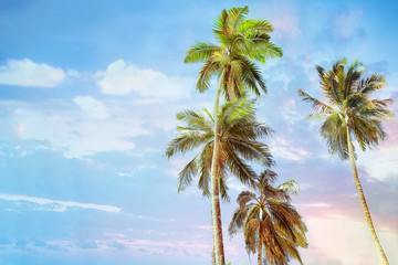 Green palm trees on evening sunset sky background