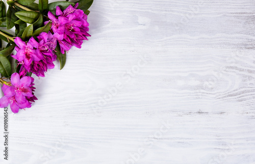 Seasonal wild rhododendron flowers on white wood background