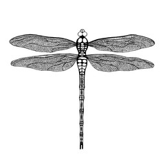 Dragonfly. Black dragonfly on white background. Hand drawn vecto