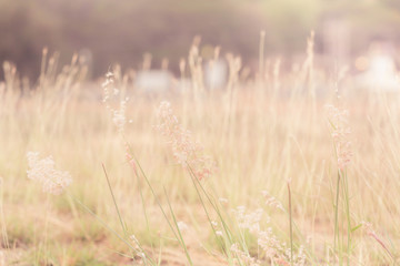 Prairie grass in the evening light and dressed in retro style.