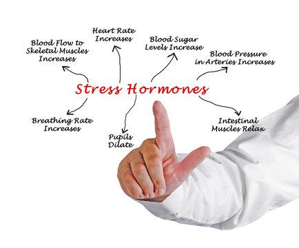 Effects of Stress Hormones