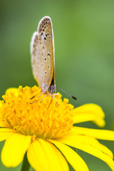 Butterflies, sunshine, Daisy, chrysanthemum, flowers