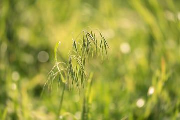 Closeup photo of grass seed