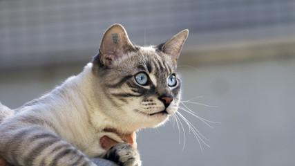 Katzen Baby.