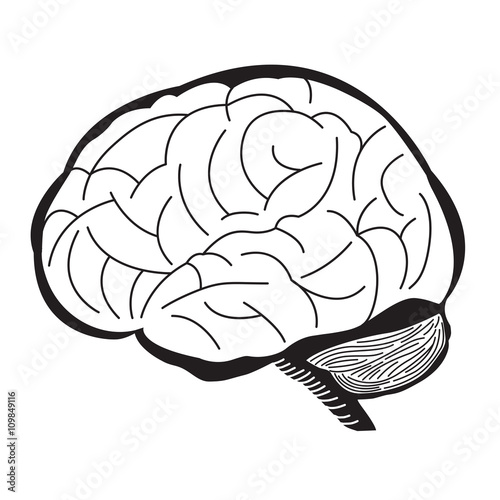 quotblack and white brain illustration human brain outline