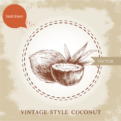 Hand drawn coconuts isolated on vintage background. Retro sketch style vector tropical food illustration.