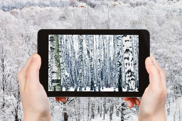 tourist photographs frozen birch forest in winter
