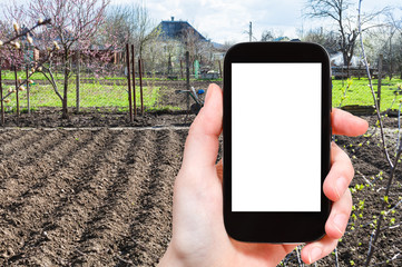 farmer photographs vegetable garden on smartphone