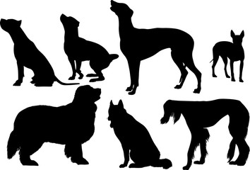 seven black silhouette isolated on white dogs