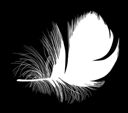wide isolated short white feather with down
