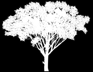 white tree with large crown