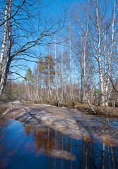 Russian forest in early spring.