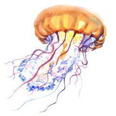 Orange Ocean Water Jellyfish, medusa, isolated, sea life, watercolor illustration