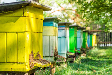Wooden beehives with bees in summer