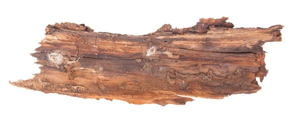 piece of tree bark. Isolated on white background