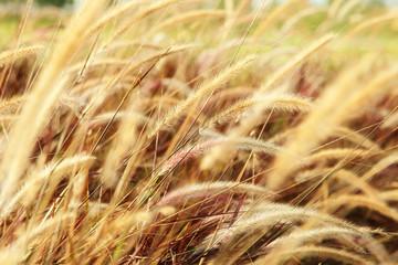 Flowers grass blurred bokeh background vintage in warm tone