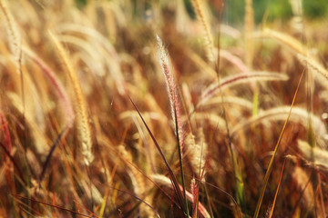Flowers grass blurred bokeh background vintage in warm tone,out of focus