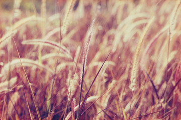 Abstract bokeh background of flowers grass