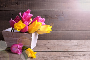 Pink and yellow  spring tulips  in box on vintage  wooden backgr