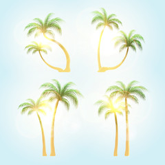 Set  realistic trees with patches of sunlight . Palm tree at sunset solntse.Tropical palm trees.