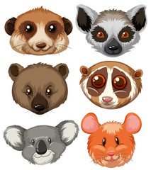 Different type of animal heads