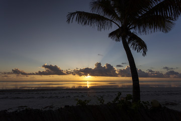 Silhouette of palm tree over a beautiful and colorful sunrise on