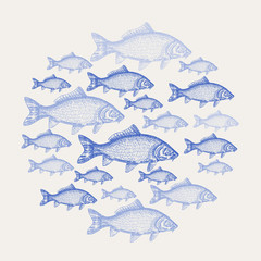 Hand drawn carp fish background. Vector illustration seafood