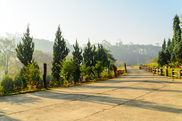 Concrete walkway in garden with nature pine tree and flower