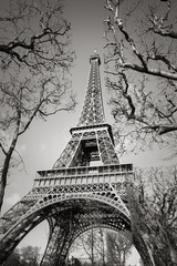 Black and White vertical view of the Eiffel Tower through tree branches on the Champs de Mars, Paris, France