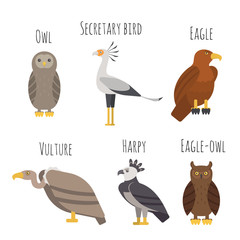 Vector set of Colorful birds of prey icons. Owl, vulture, eagle