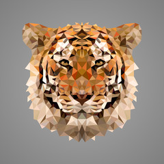 Bengal tiger low poly portrait