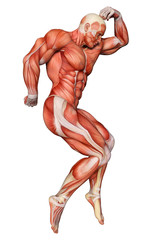 muscle man healthcare and medical