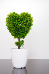 tree in heart shape on white background