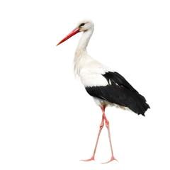 White Stork isolated on white, Ciconia ciconia